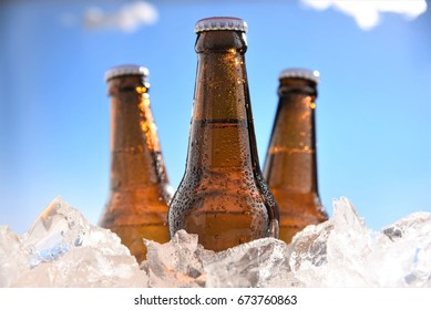 brown bottles beer chill in ice