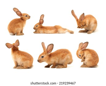brown bunny rabbits isolated on white background