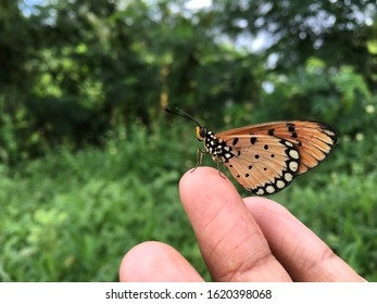 Brown butterflies cling to the human finger without fearing even a little.