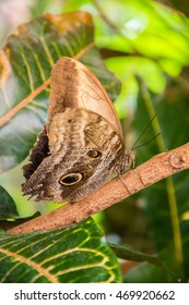 Brown butterfly on a branch