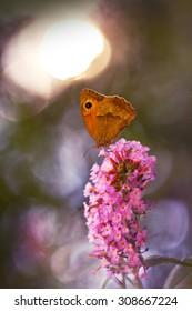brown butterfly on a butterfly bush