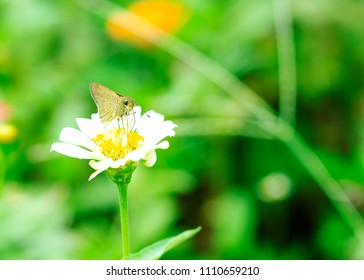 Brown butterfly on flower blooming in the garden