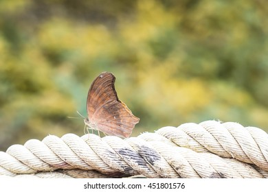 Brown butterfly on the rope with copy space