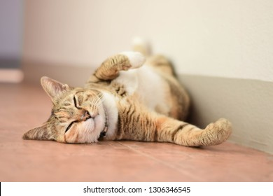 Brown cat 06, Animal portrait