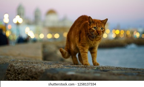 Brown Cat and Cathedral by the Sea Cadiz Spain