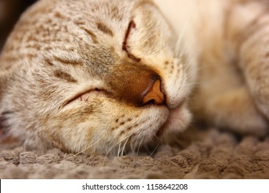 brown cat in deepsleep