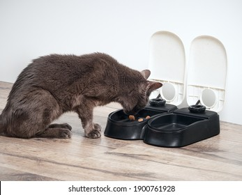 Brown cat eats from the automatic feeder