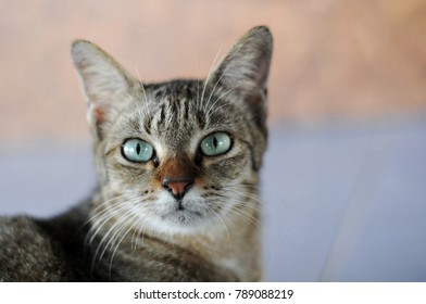 brown cat face with huge green eyes