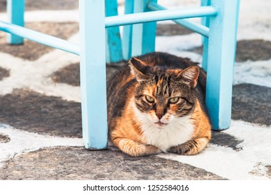 A brown cat in Greece, resting under blue chair.
