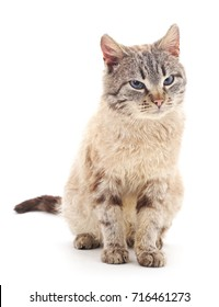 Brown cat isolated on a white background.