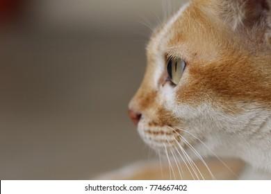 Brown cat looking away