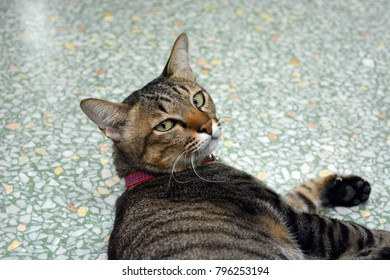 Brown cat lying on the floor and looking back