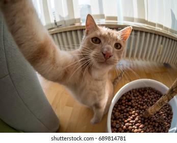 brown cat makling a selfie