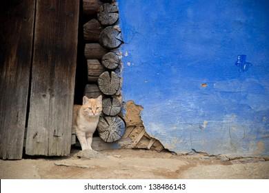 Brown Cat on Barn Door