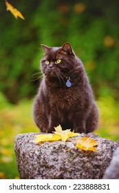 brown cat outdoors in autumn