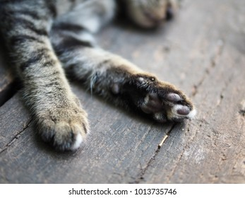 brown cat sleeping on a wooden floor close up of the feet with little pads.