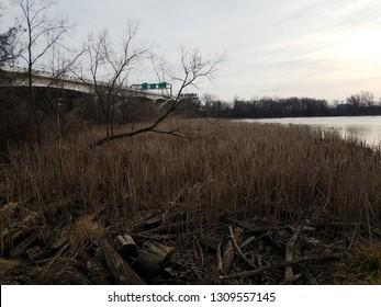 brown cat tail grasses and Potomac river and Wilson bridge in Virginia