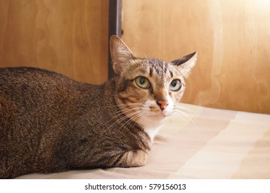 Brown cat with woodden background - Shutterstock ID 579156013