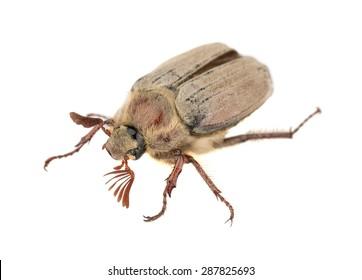June Bug Images, Stock Photos & Vectors | Shutterstock