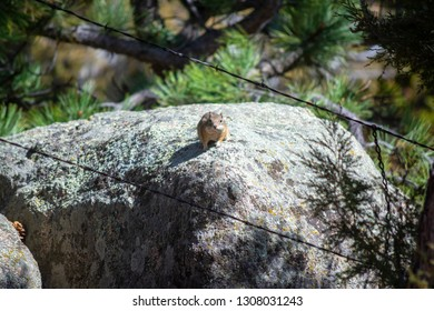 Brown Chipmunk on a Rock on a Sunny Day