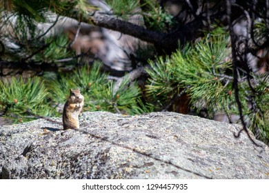 Brown Chipmunk Standing on a Rock on a Sunny Day