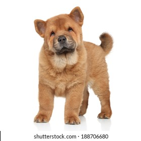 Brown Chow-Chow puppy portrait on white background with reflection