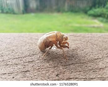 brown cicada shedded skin on brown wood railing