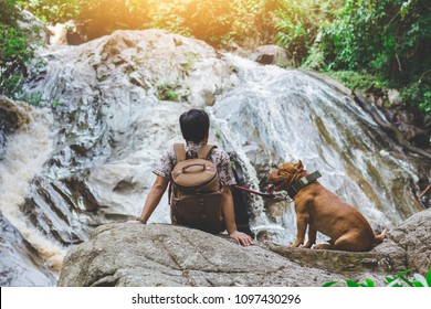 brown color pitbull dog whit its Master's sitting on stone in the forest waterfall