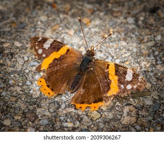 Brown colored butterfly image, selective focus photo of a butterfly