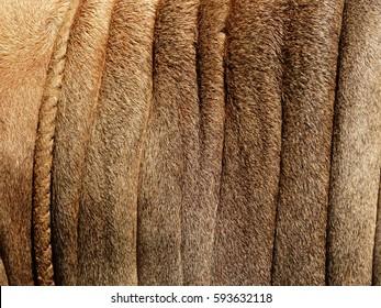 brown cow skin texture