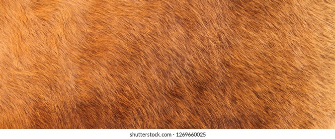 a brown cowhide as a background
