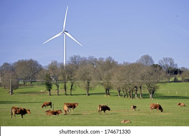 Brown cows and calfs with one wind turbine in France, Sarthe department