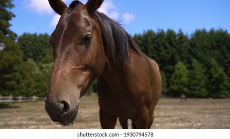Brown cute beautiful horse head closeup with trees background