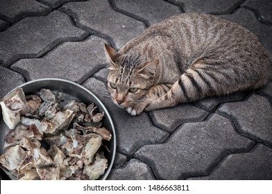 Brown cute cat with bone in cup at the floor