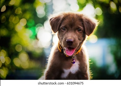 Brown cute labrador retriever puppy dog looking withabstract bokeh foliage color background