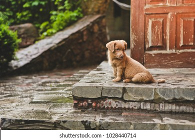Brown cute puppy dog sits on the steps of the house