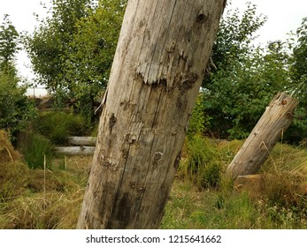 brown dead tree trunks and green trees and grasses