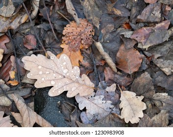 brown decaying mixed autumn leaves on a forest floor with raindrops