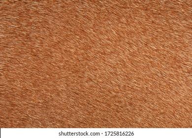 Brown deer fur used as a background image