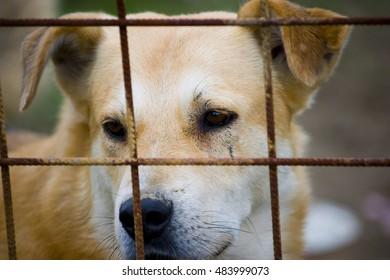 Brown dog behind metal fence looking out.