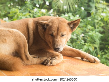 Brown dog close the eyes for relax