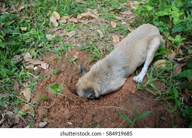 The Brown Dog dig hole in the ground