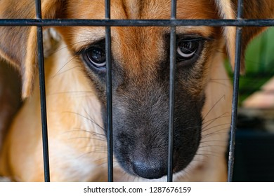 Brown Dog eyes close up looking at camera in black cage, Rabies vaccine or hydrophobic quarantine concept.