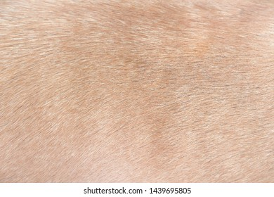 Brown dog fur patterns texture for background