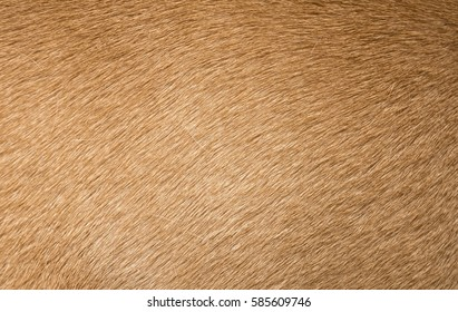 Brown dog fur texture or background. Macro shot.