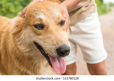 brown dog and hand of children