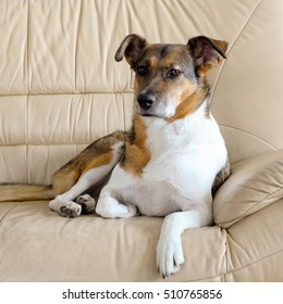 brown dog on the brown armchair