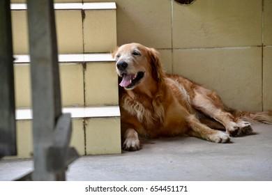 Brown dog on ground