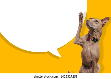 A brown dog  on yellow and  white Background .