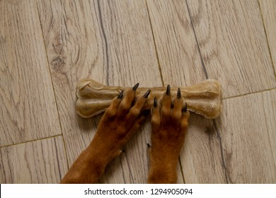 Brown dog paws resting on a dog bone, chew toy.